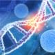 How to Decipher Human Leukocyte Antigen (HLA) Nomenclature