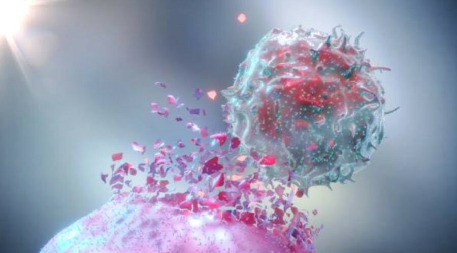 HLA Immune Cell Attacking Cancer Cell