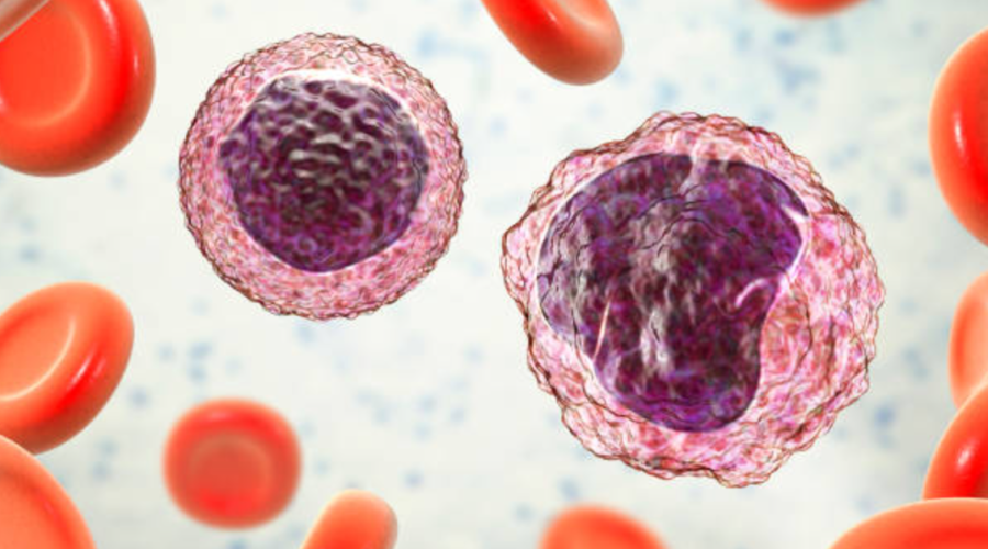 T Cells and B Cells in Peripheral Blood